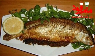 ماهی شکم پر جنوبی بدون فر