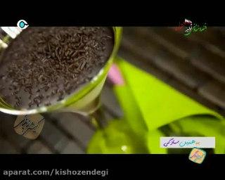 کیش و زندگی کباب کوبیده مرغ آشپزی آسان