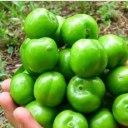 خورش گوجه سبز